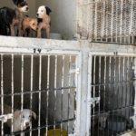 Cuidar a mascotas del calor, pide Control Animal