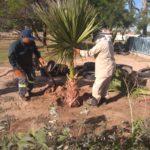 Siguen labores de embellecimiento a áreas verdes
