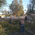 Retira Obras Públicas varios árboles caídos