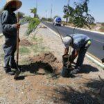 Invita Obras Públicas a sembrar plantas